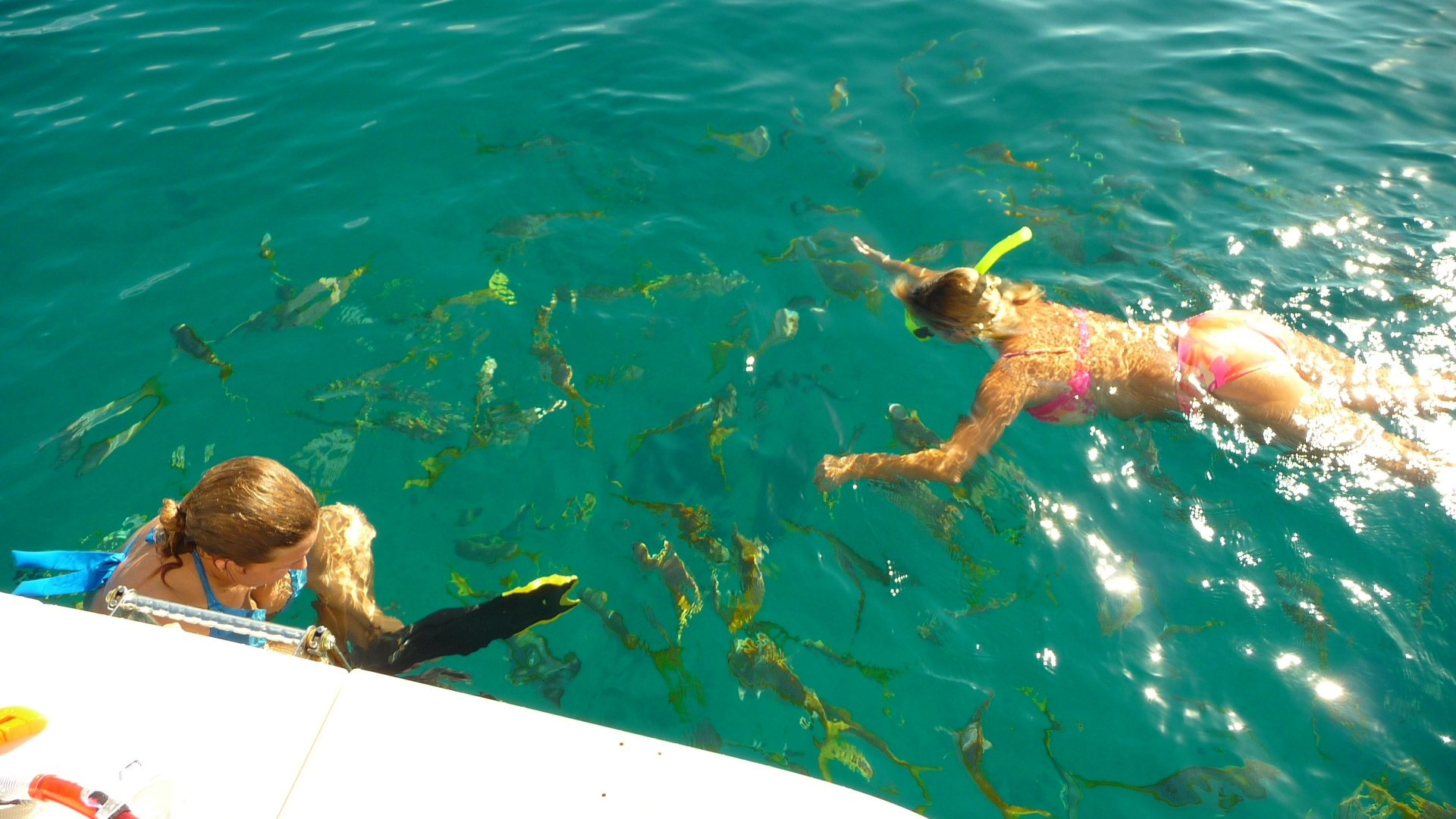 Our personalized charters include snorkel equipment and instruction for beginner and advanced.  We take you to the best spots and put you right on colorful fish and turtles for the perfect experience.